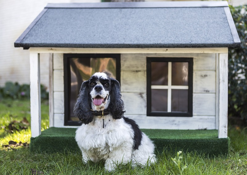 Heated Doghouse